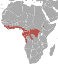 distribució Hypsignathus monstrosus