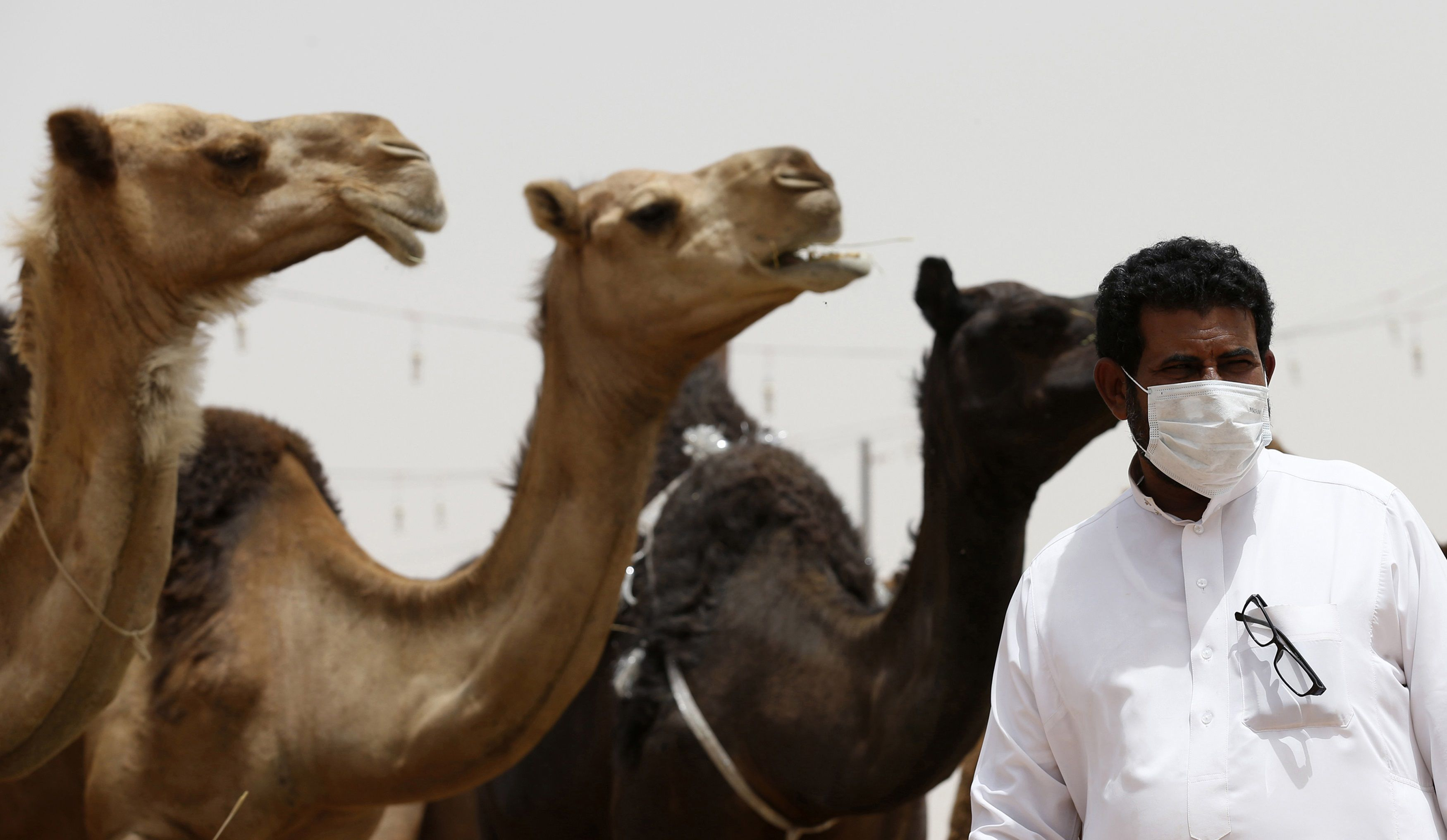 CamelMers