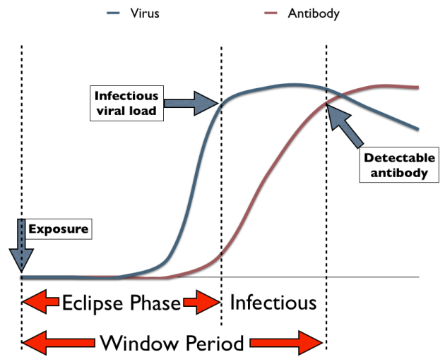 VIH eclipse and window phases