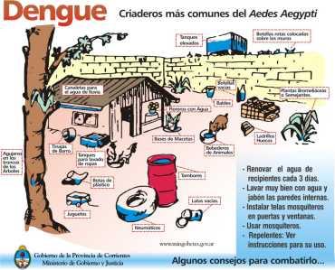 dengue criaderos en una casa