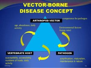 vector-borne-diseasesask-24-638