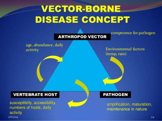 vector-borne-diseasesask-24-638