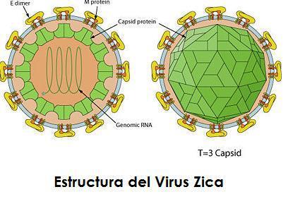 virus-zica